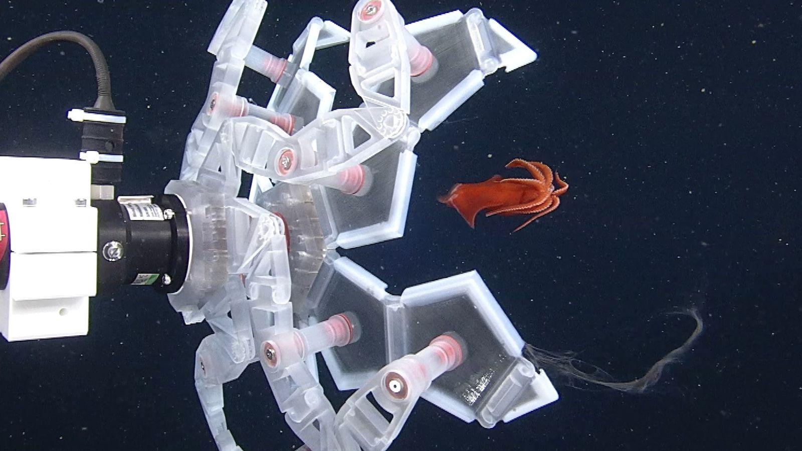 Un robot d'un nouveau genre capture des créatures marines - avec douceur