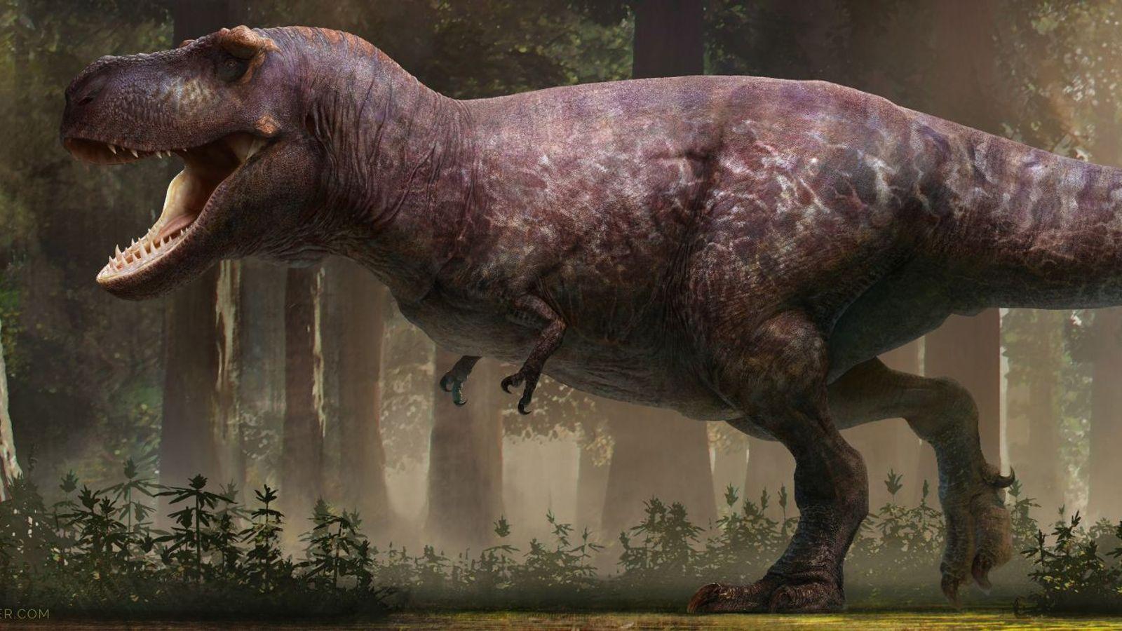 Représentation du Tyrannosaurus Rex selon RJ Palmer
