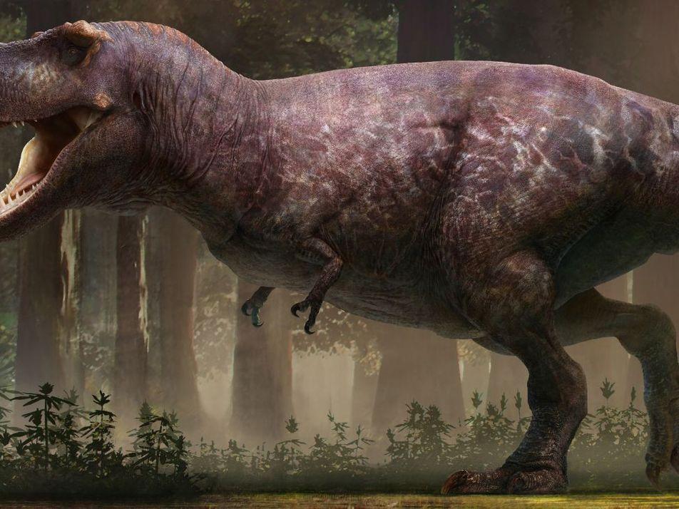 Voici à quoi ressemblait vraiment le Tyrannosaurus Rex