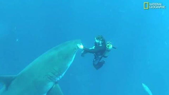 Rencontre avec le grand requin blanc
