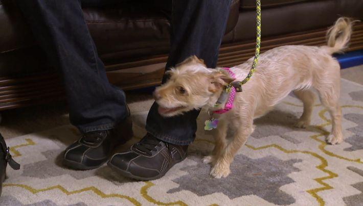 Roxy la petite chienne trés nerveuse