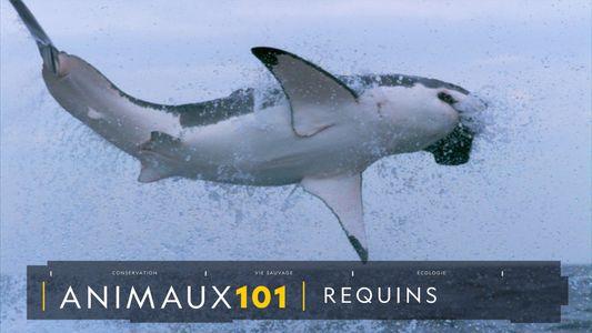 COMPRENDRE : Les requins