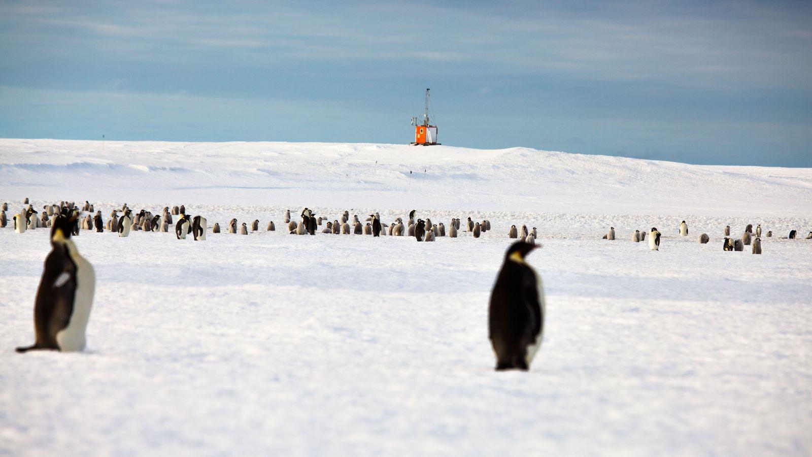 L'observatoire SPOT, situé dans la baie d'Atka, en Antarctique, permet de filmer toute l'année les colonies ...