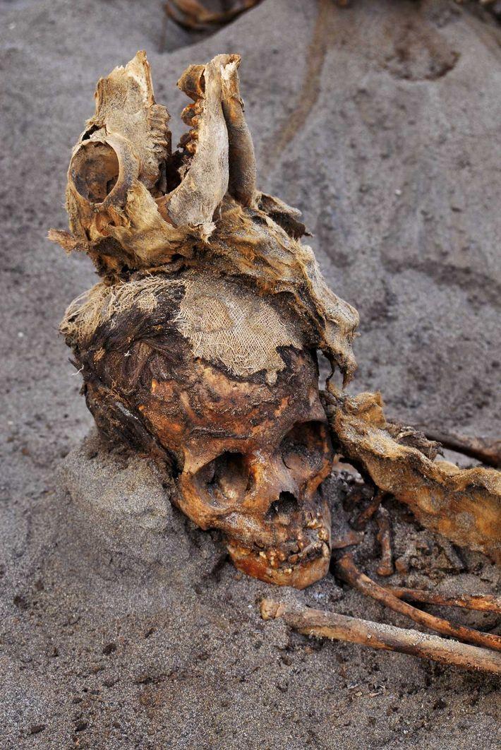 Les restes d'un enfant et d'un lama émergent du sol, à Huanchaquito. La majorité des enfants ...