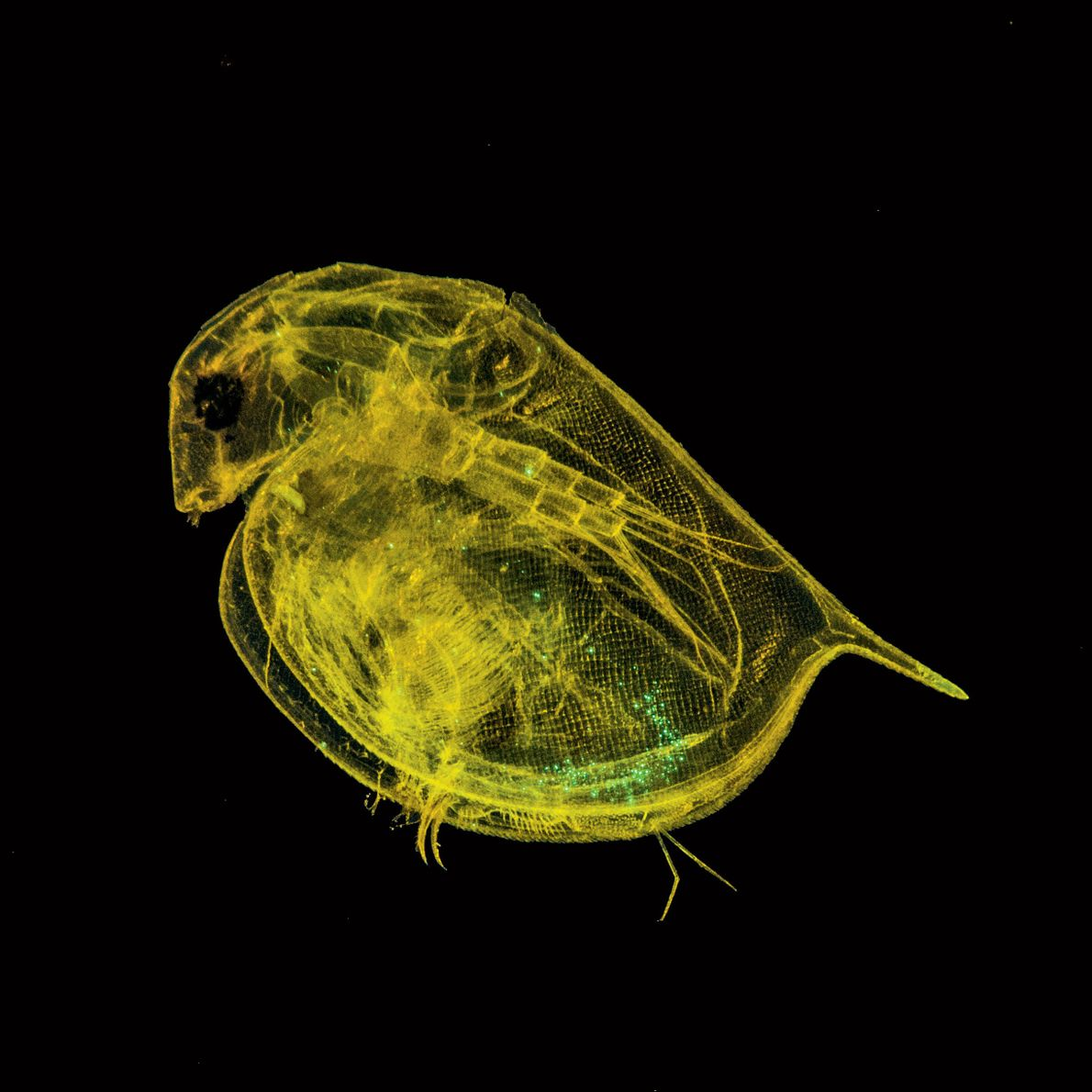Microplastiques : quels risques pour la santé ?