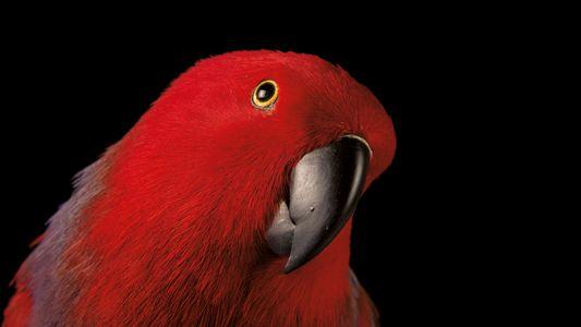 Ces oiseaux qui ressemblent aux Hommes