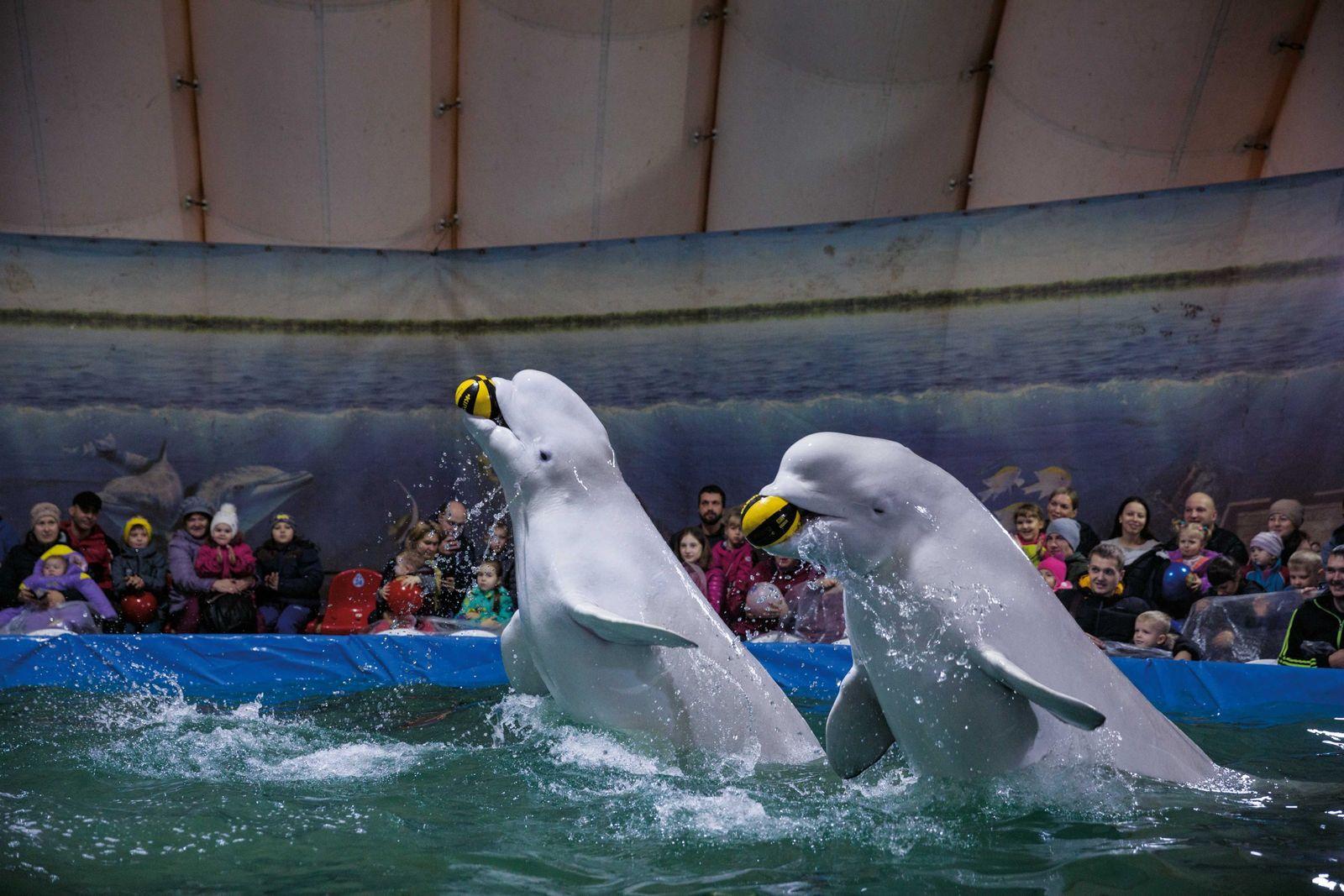 Tourisme animalier : la grande illusion