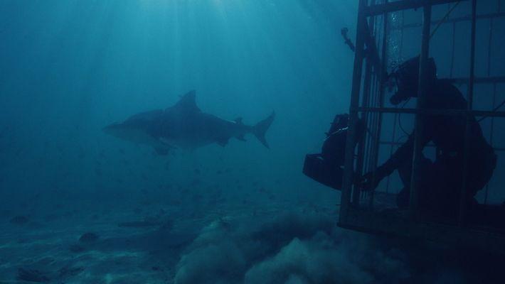 Requin-bouledogue au milieu des volcans