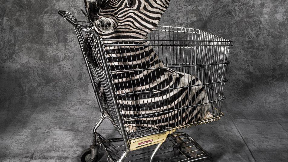 Cette photographe montre l'horreur du trafic d'espèces sauvages