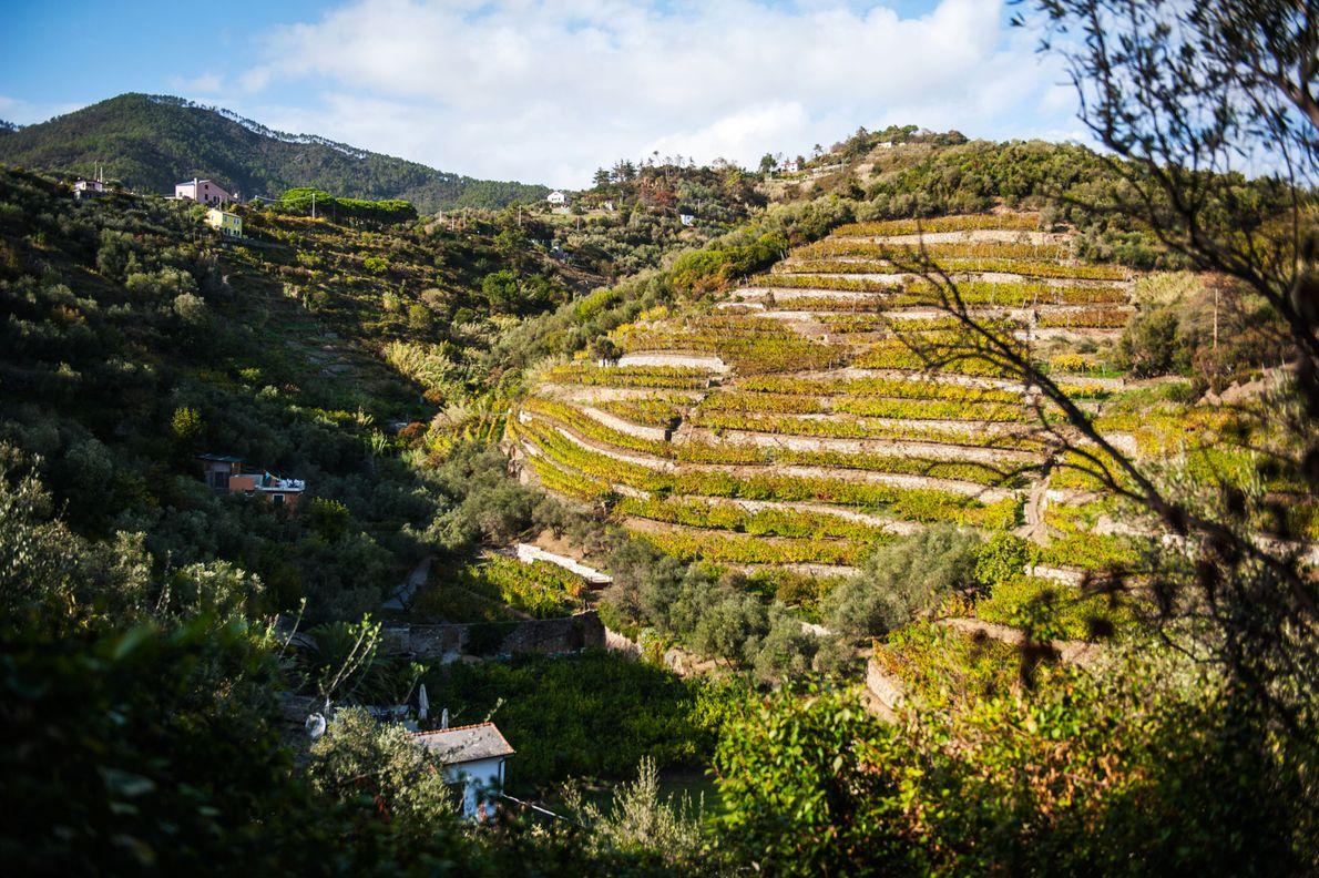 Monterosso est le premier village que l'on croise en venant de Gênes. Sur les hauteurs, on ...