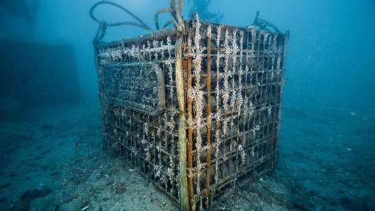 Ils font vieillir leur champagne en haute mer