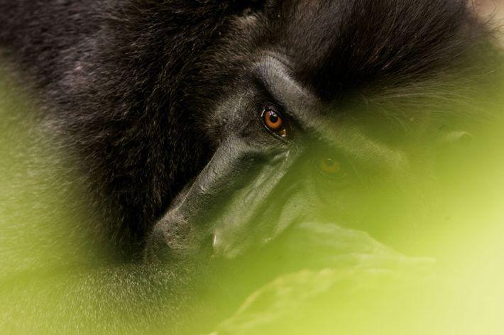 Faire comprendre aux enfants l'importance d'une forêt peuplée de singes finira par payer et enrayera leur ...