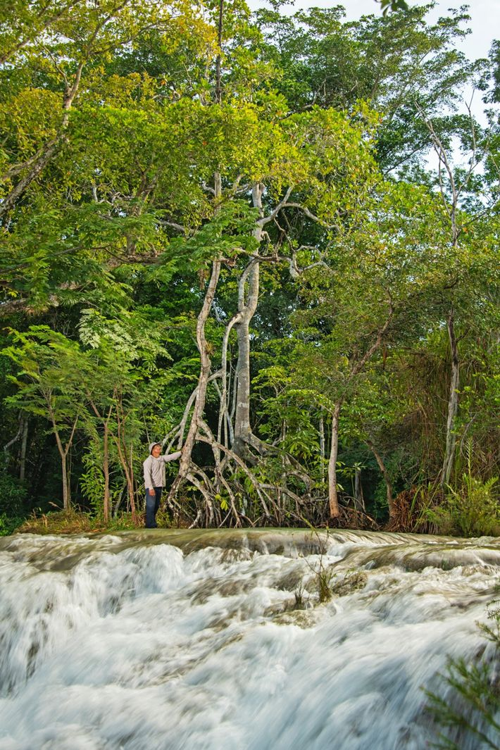 tall-red-mangrove