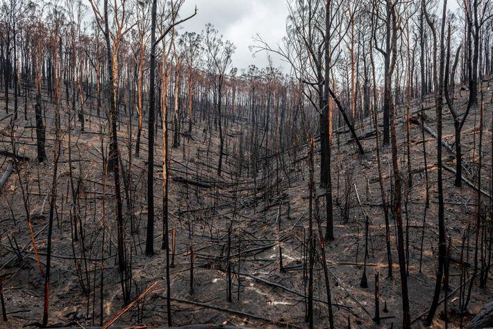 L'Australie a été frappée par de nombreux feux de brousse en 2019 et au début de ...