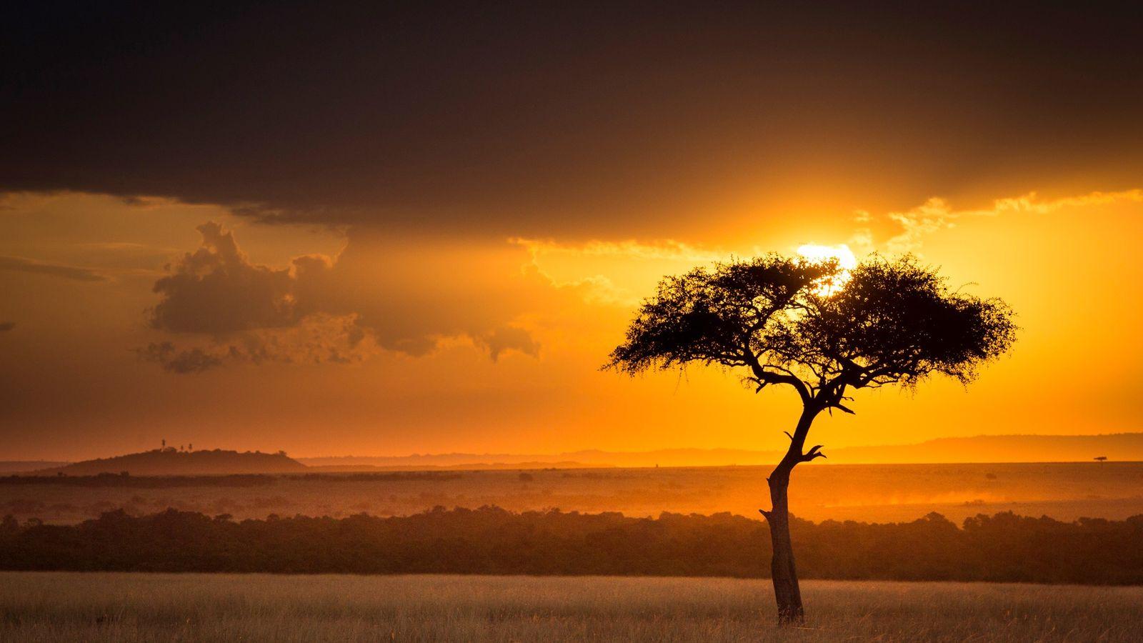 Le soleil se couche derrière un acacia dans la réserve nationale du Masai Mara, au Kenya. ...
