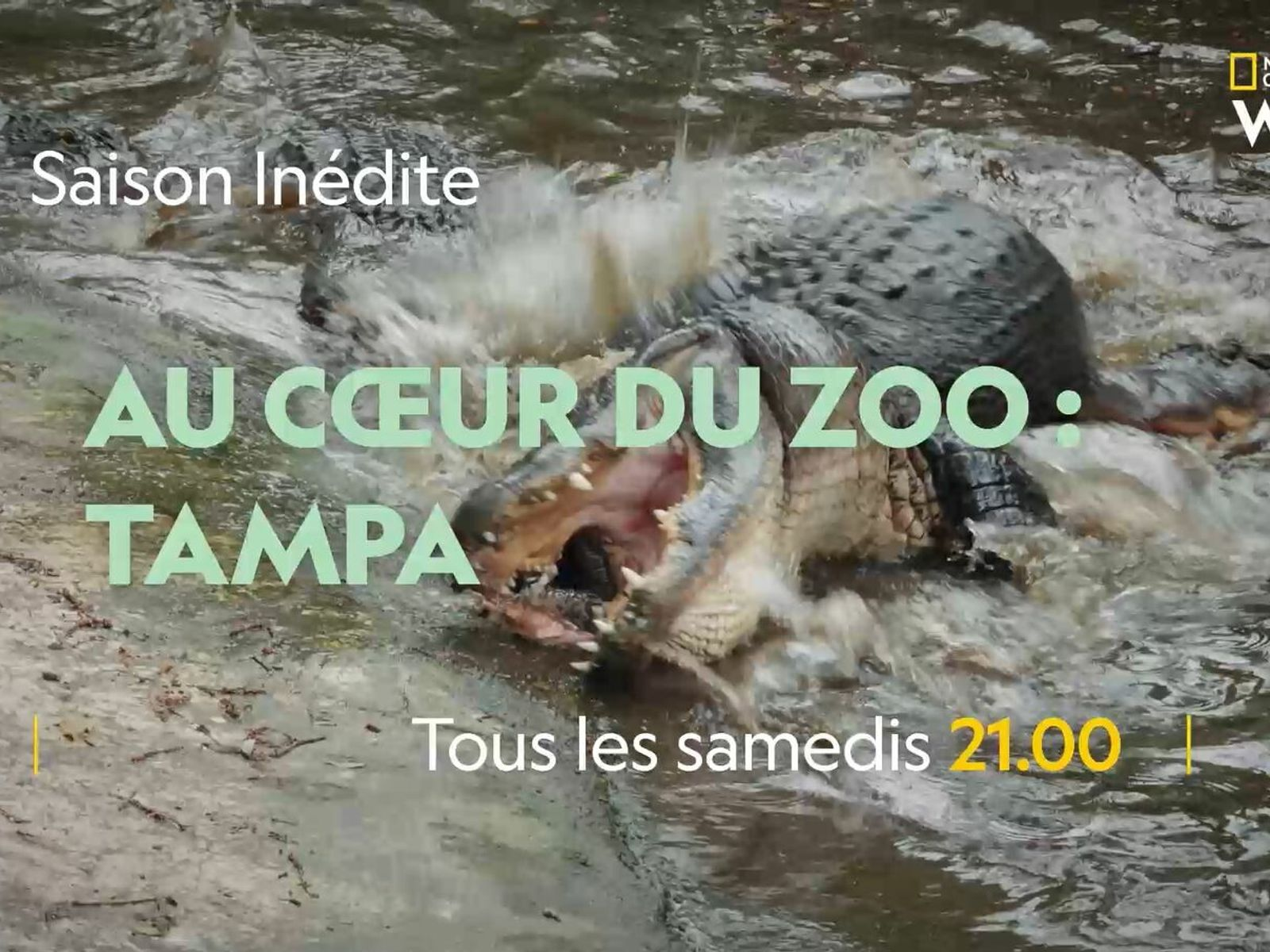 Au coeur du zoo.