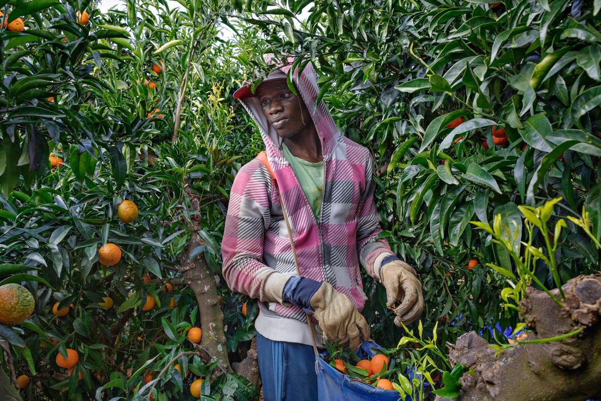 Après un périple qui l'aura mené du Sénégal à la ceinture agricole du sud de l'Espagne ...