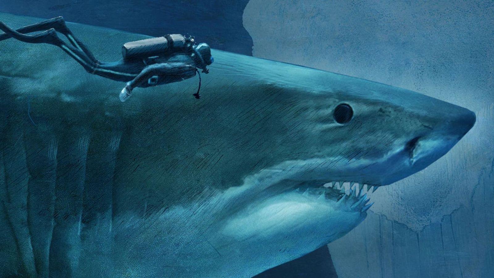 Les requins, seigneurs des mers