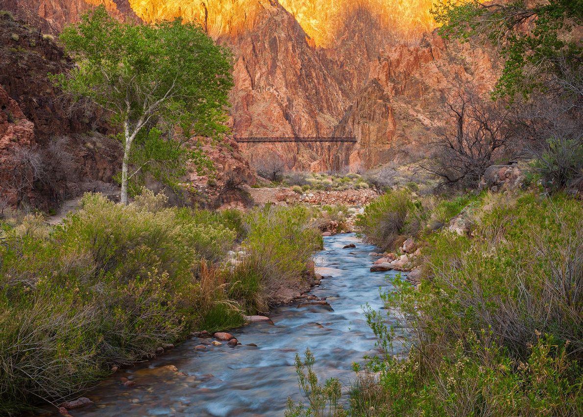 Le ruisseau Bright Angel Creek s'écoule à travers le parc pour rejoindre sa confluence avec le ...