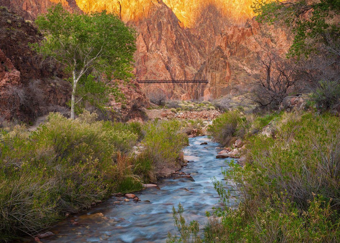 Le ruisseau Bright Angel Creek s'écoule à travers le parc pour rejoindre sa confluence avec le …
