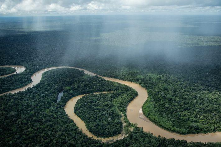 C'est dans la région en amont du fleuve Curanja, près du parc national de l'Alto Purús et ...