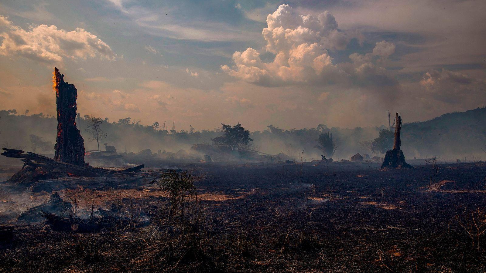 Une forêt brûlée de l'état de Para, au Brésil, dans le bassin amazonien, le 27 août 2019. Les ...