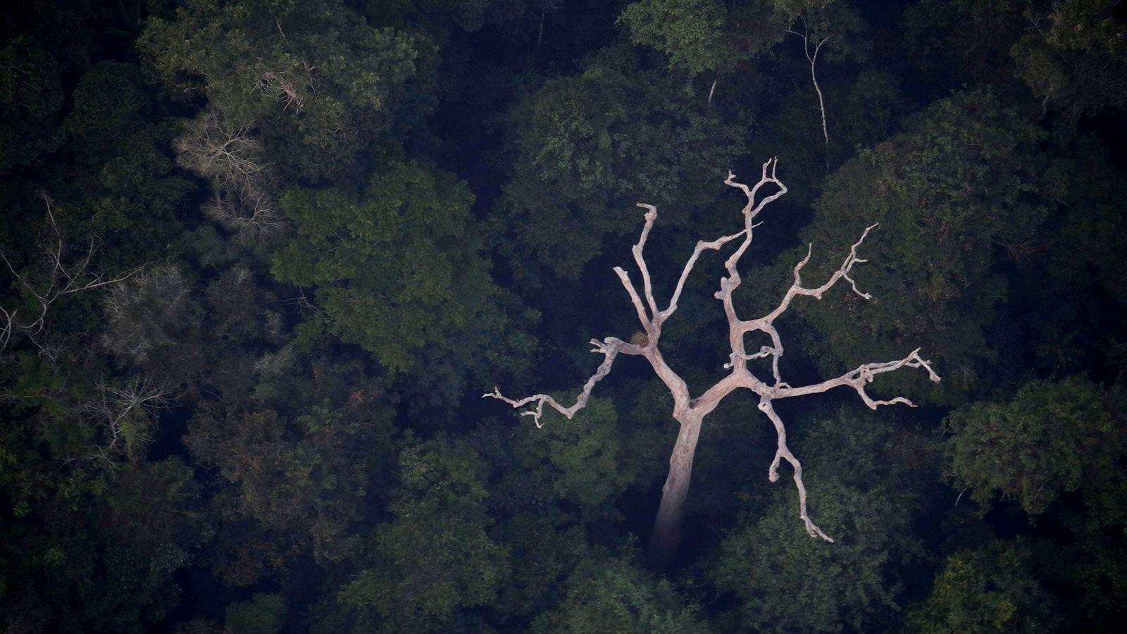 Une vue aérienne de l'Amazonie près de Porto Velho, dans l'État du Rondônia, au Brésil, le ...