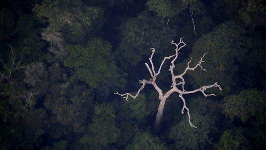 Non, l'Amazonie ne produit pas 20 % de l'oxygène de la planète