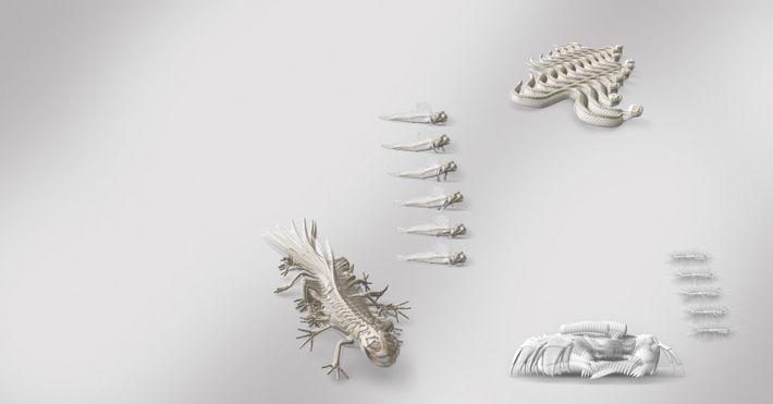 Gobie (Periophthalmus gracilis),serpents, Salamandre tigrée (Ambystoma tigrinum), Scutigère véloce(Scutigera coleoptrata), et Crabe (Ocypode quadrata).