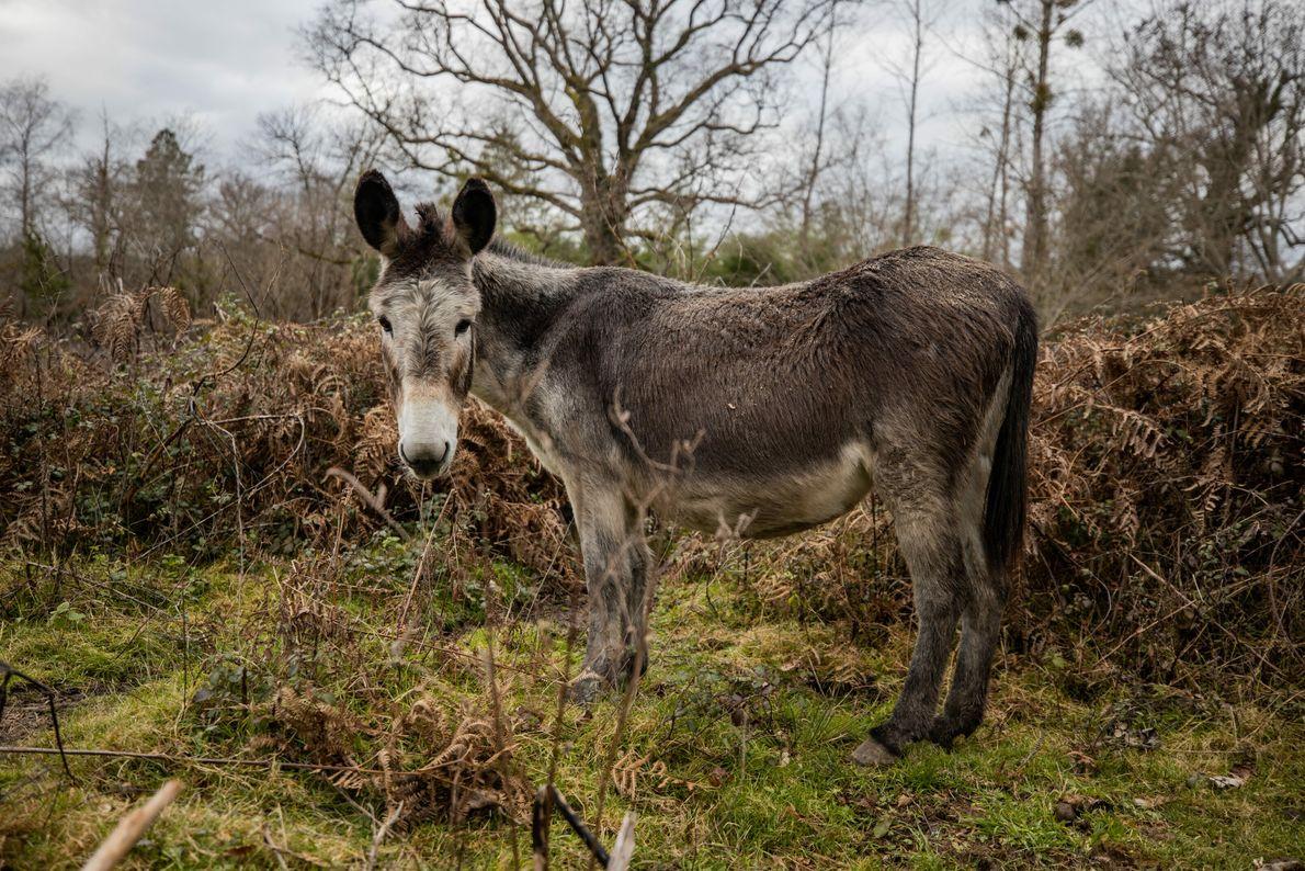 Une ânesse dans la ferme d'Iska et Marina, à Saint-Martin-Curton, dans le Lot-et-Garonne.