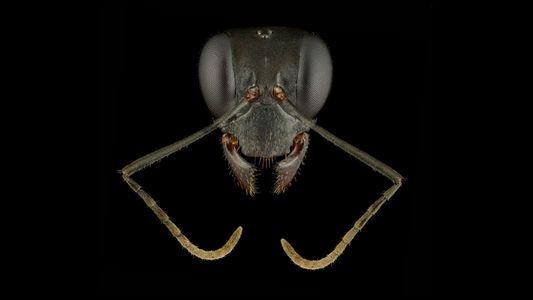 Quand les fourmis sont sublimées par la photographie