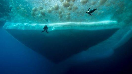 Plongée dans les eaux glacées de l'Antarctique