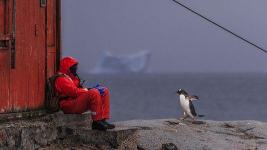 Les scientifiques souhaitent protéger l'Antarctique, seul continent rescapé du coronavirus