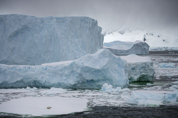 Petits morceaux de glace ougigantesques blocs plus hauts quenotre navire, les icebergs revêtent les tailles et ...