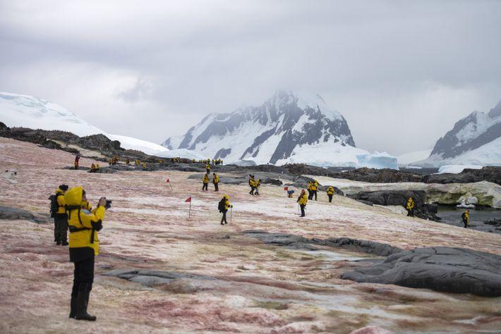 Les passagers de L'Austral découvrent l'île de Petermann, dont la neige est colorée par le guano ...