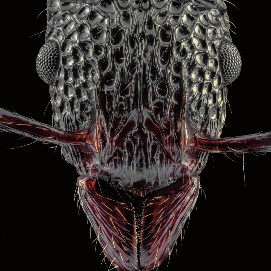 Les fourmis comme vous ne les avez jamais vues