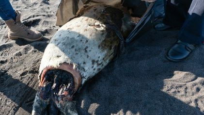 Russie : une gigantesque marée rouge menace la biodiversité de la baie du Kamtchatka