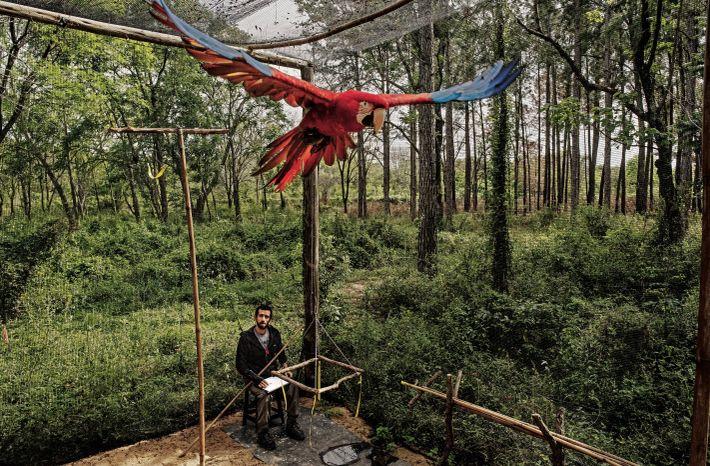 Le vétérinaire Jorge Gómez suit de près l'entraînement d'un ara chloroptère qui sera relâché dans le ...
