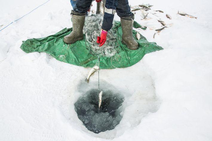 Malgré le froid, la pêche sous la glace est une activité lucrative.</p> <p>