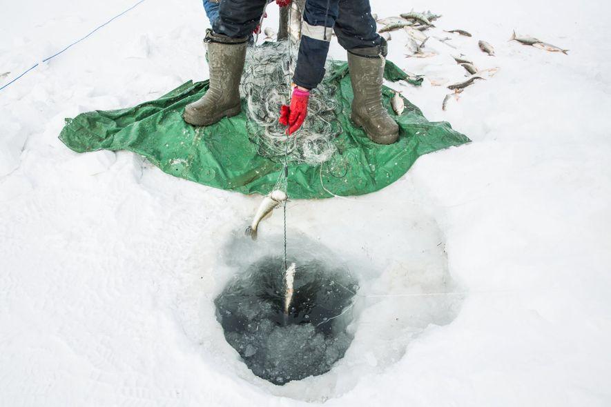 Malgré le froid, la pêche sous la glace est une activité lucrative.