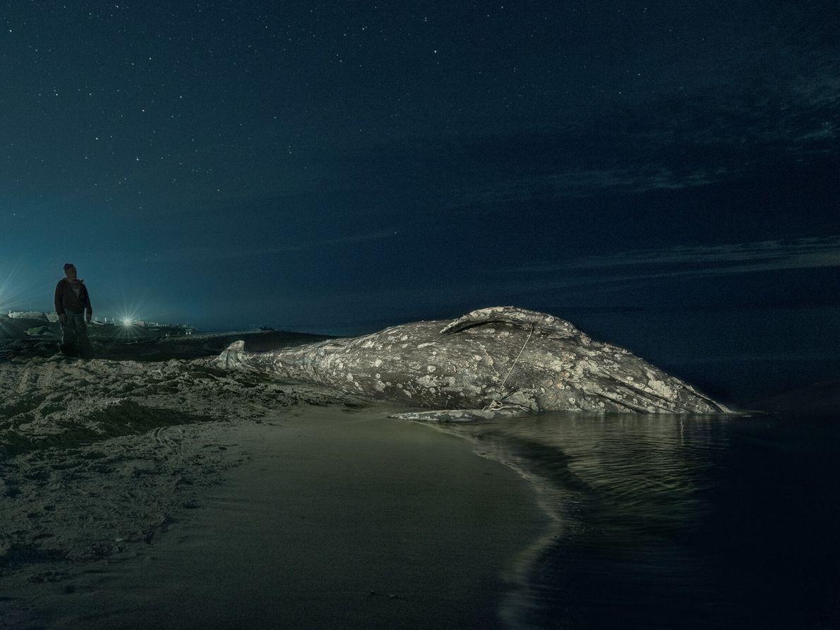 La nuit tombe sur les chasseurs tchouktches qui regagnent leur village après avoir harponné cette baleine ...