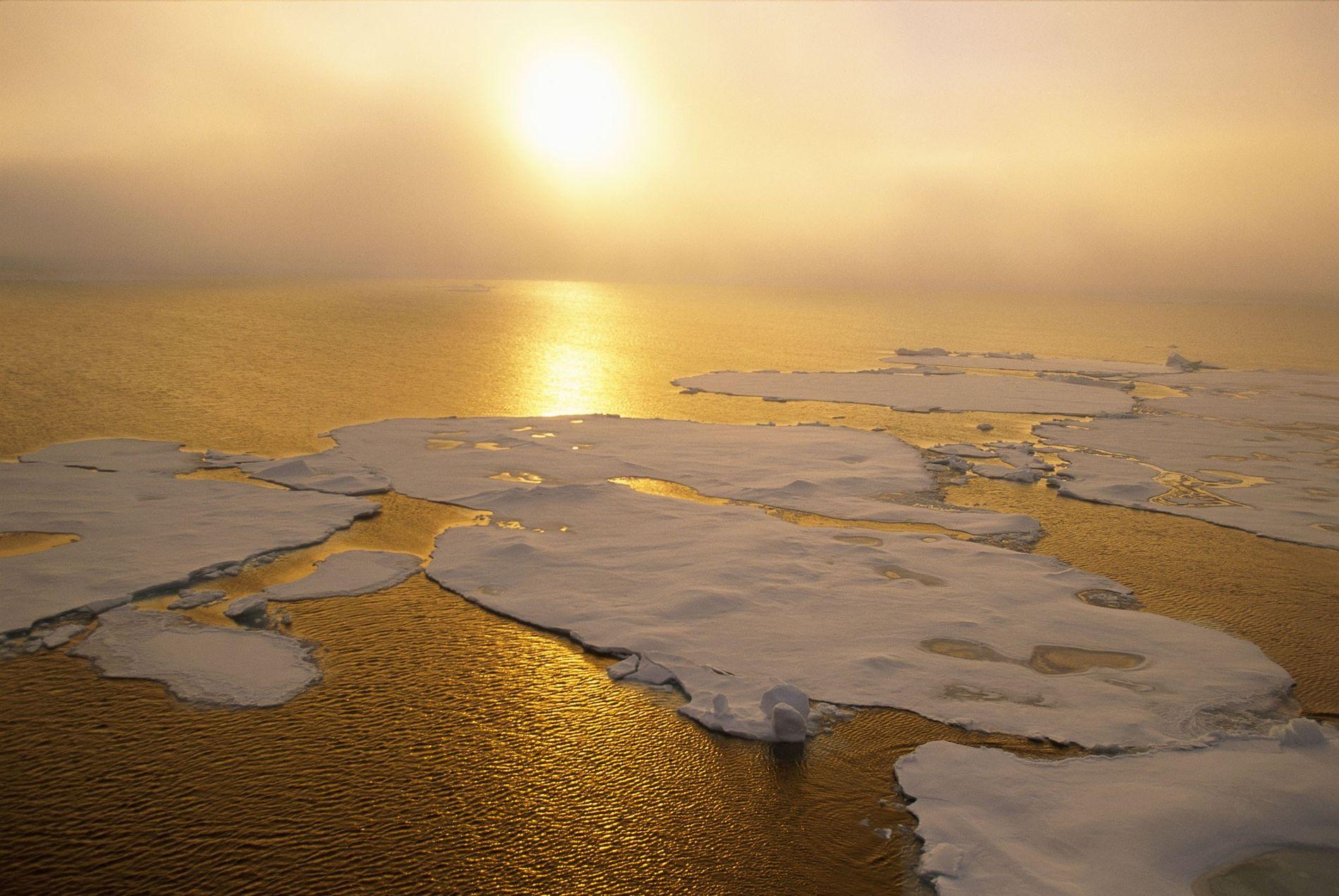 La glace arctique fond rapidement, faisant monter le niveau des mers. Mais les scientifiques savent peu de choses sur les poissons qui pourraient y vivre et sur la possibilité de les capturer de manière durable.