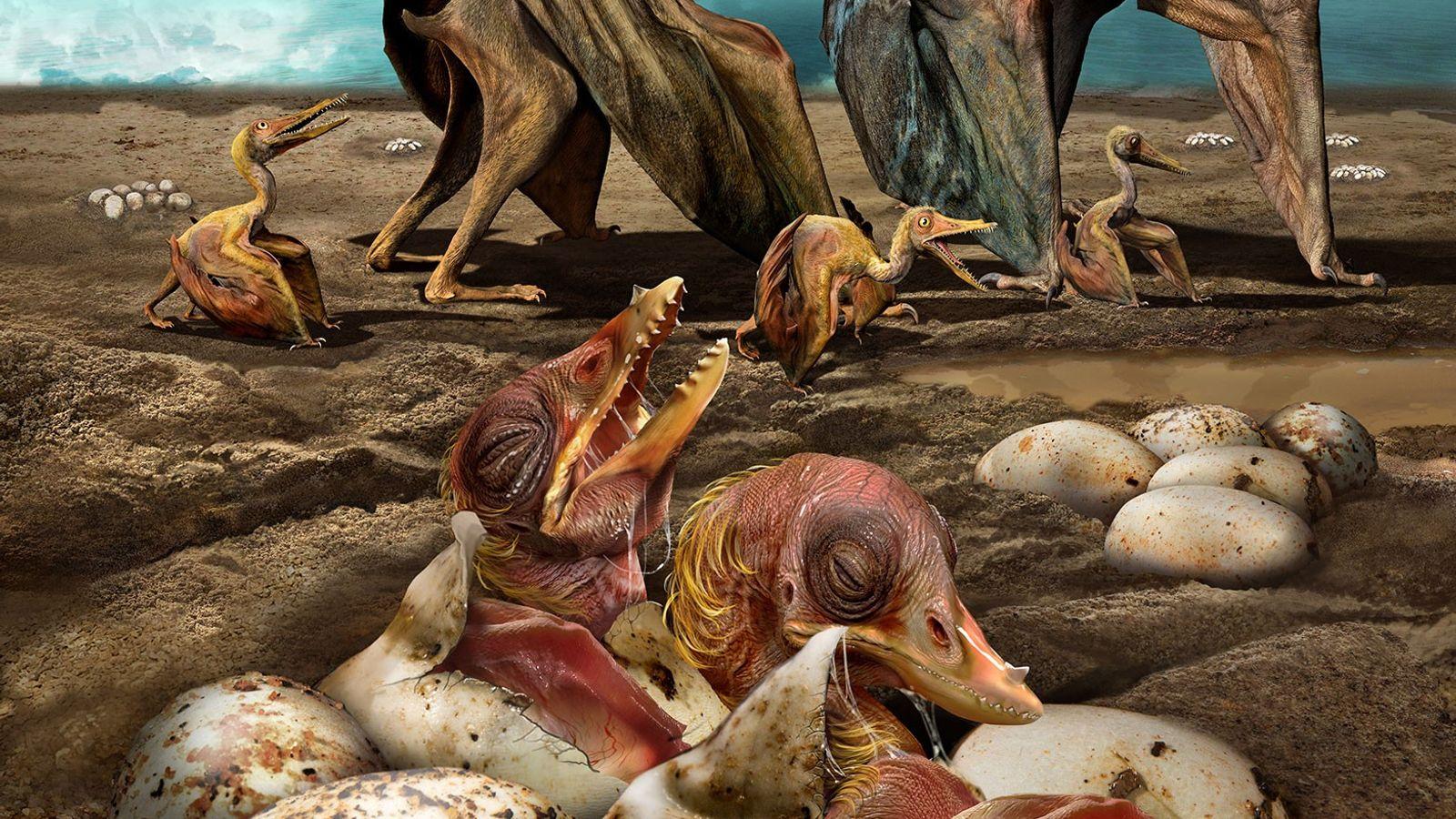 Illustration de Hamipterus tianshanensis, une espèce de ptérosaures ayant vécu dans la Chine actuelle il y ...