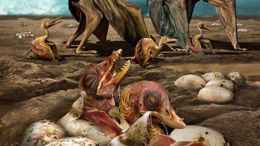 Découverte record de centaines d'œufs de ptérosaures fossilisés