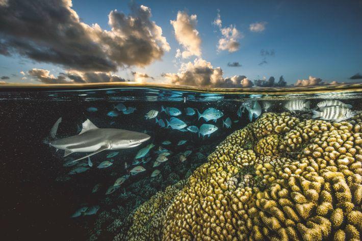 Chargé de documenter les récifs coralliens du monde par National Geographic, le photographe David Doubilet s'est ...