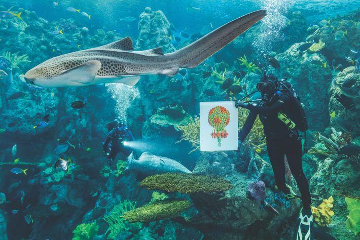 Un requin-zèbre passe, tandis qu'un plongeur de l'Aquarium du Pacifique, à Long Beach, montre l'image d'un ...