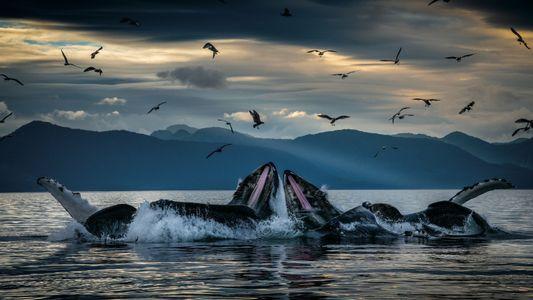 Les secrets des baleines (et autres cétacés)