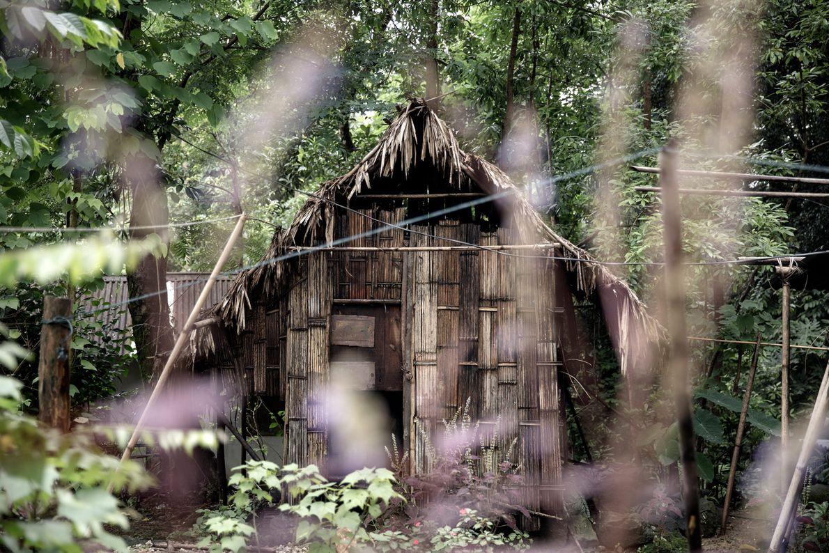 Pour construire leurs habitations, les habitants de Mawlynnong utilisent des matériaux de construction naturels.