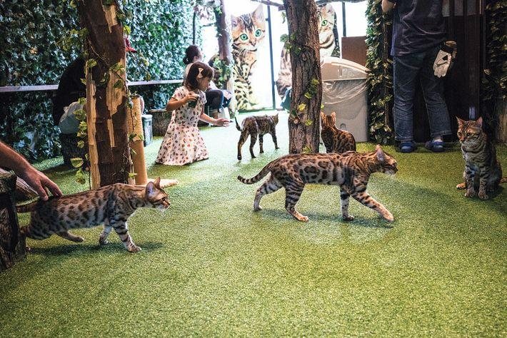 Les Tokyoïtes, qui vivent dans des appartements exigus où les animaux sont souvent interdits, apprécient les ...