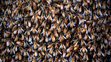 Aux États-Unis, les insectes décimés par des pesticides toujours plus toxiques
